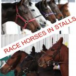 RACE HORSES NEVER WIN RACES WHILE THEY ARE IN STALLS